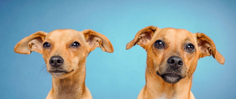 Контакты Раквереской ветеринарной клиники